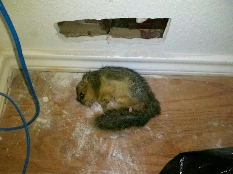 Dead Animal Amp Odor Removal Franklin Brentwood Tn Spring