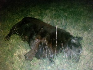 dead-dog-removal-brentwood-franklin-dead-animal-removal-300x224