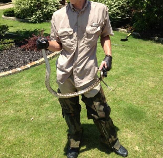 snake-in-yard-or-garage-removal-franklin-tn-snake-control-expert