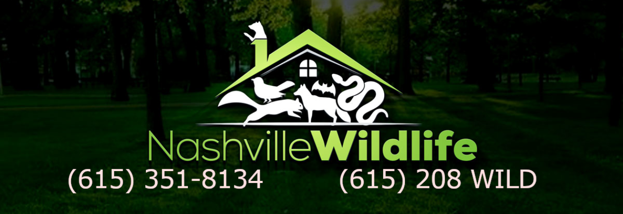 Wildlife Removal Spring Hill, Franklin, Brentwood, Thompson Station, TN